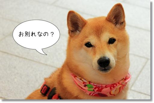 16_20120717043351.jpg