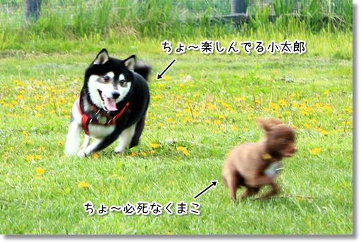 18_20120618042340.jpg