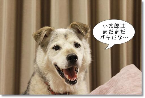 18_20120830105312.jpg