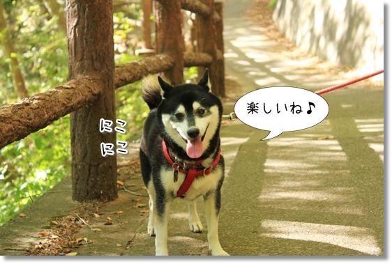 18_20121207024326.jpg