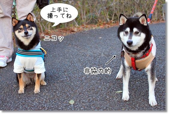 19_20130218034301.jpg