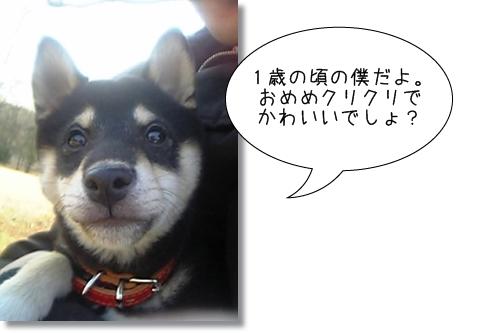 1_20120531185209.jpg