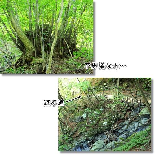 1_20120922013153.jpg