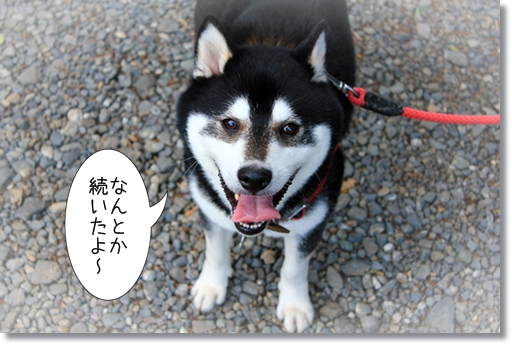 1_20121101032451.jpg