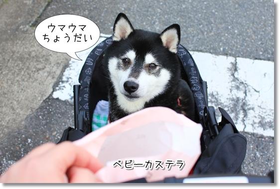 1_20121201115852.jpg