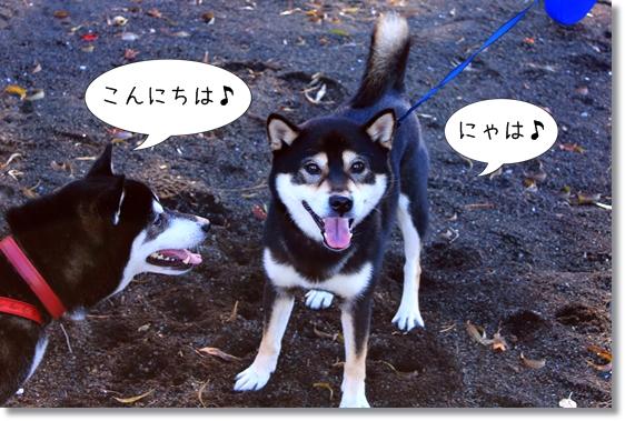 1_20121202021709.jpg