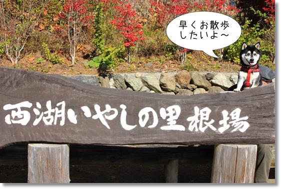 1_20130117120129.jpg