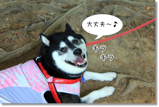 20_20120921122931.jpg