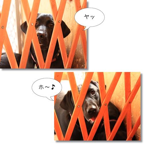 20_20121017182045.jpg