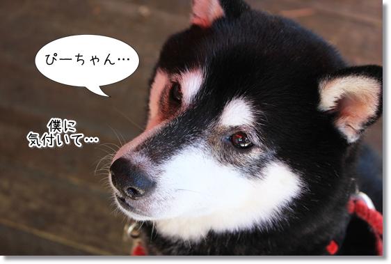 20_20121205153449.jpg