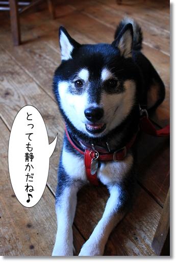 22_20121017182044.jpg