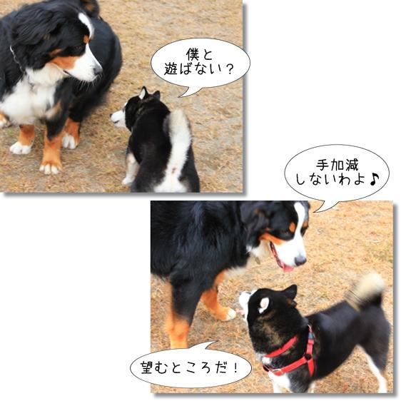 22_20121212173827.jpg