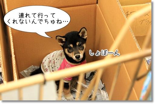 23_20120727182456.jpg