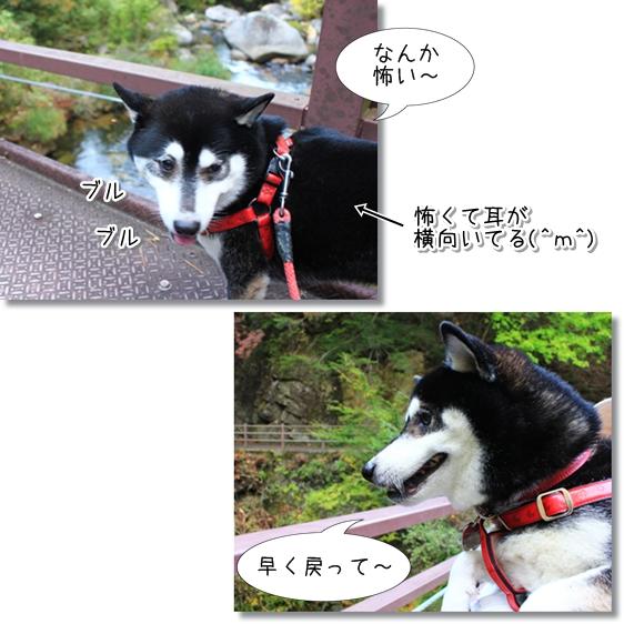 23_20121208013640.jpg