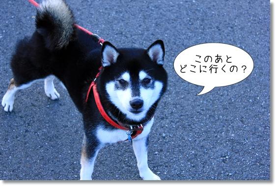 23_20130121102635.jpg