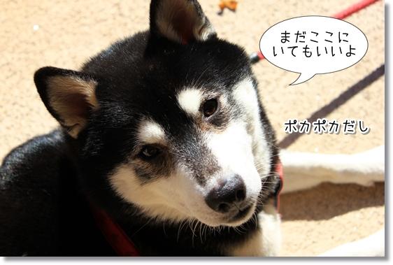 24_20121225190457.jpg