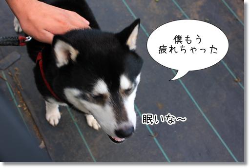 25_20120510024419.jpg