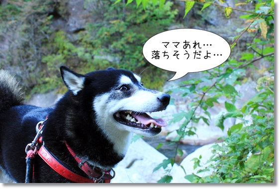 27_20121207031019.jpg