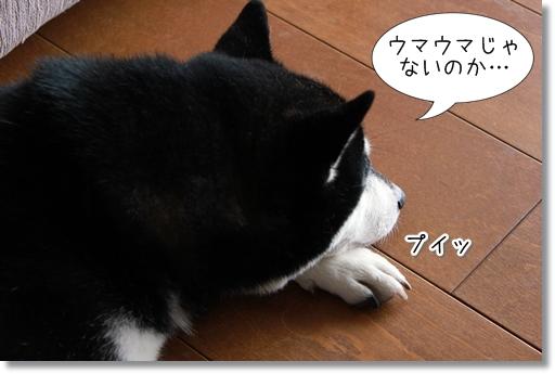 2_20120803165738.jpg