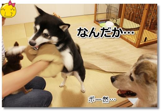 2_20120830102912.jpg