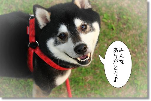 2_20121101032450.jpg