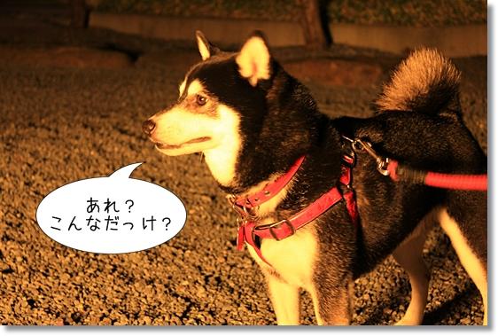 2_20121230100153.jpg