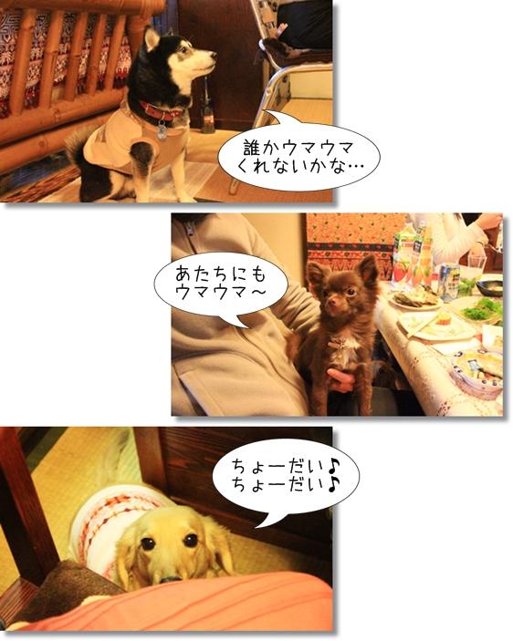 2_20130111085251.jpg