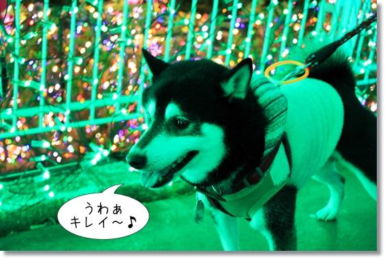 2_20130222075956.jpg