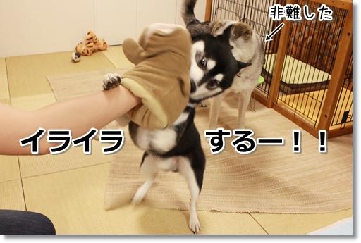 3_20120830102912.jpg