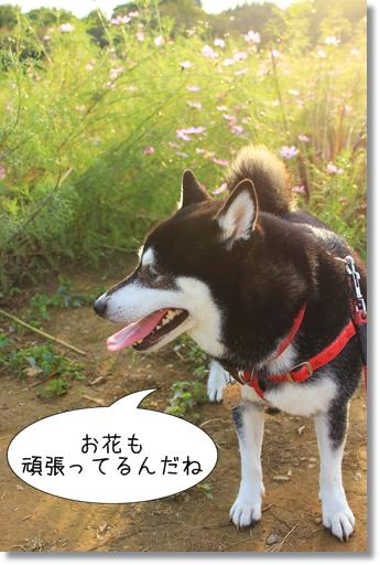 3_20121025031900.jpg