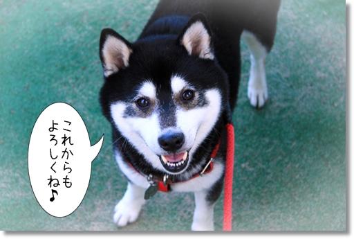 3_20121101032450.jpg