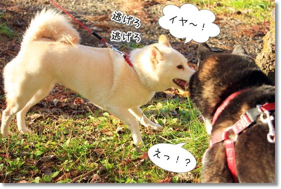 3_20121124015433.jpg