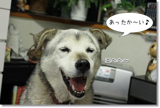 3_20121204135852.jpg