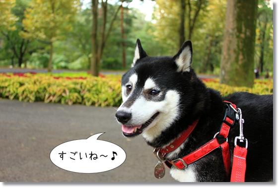 3_20121212165437.jpg