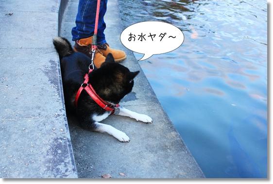 3_20121223033340.jpg