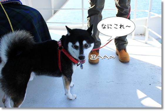 3_20121227162943.jpg
