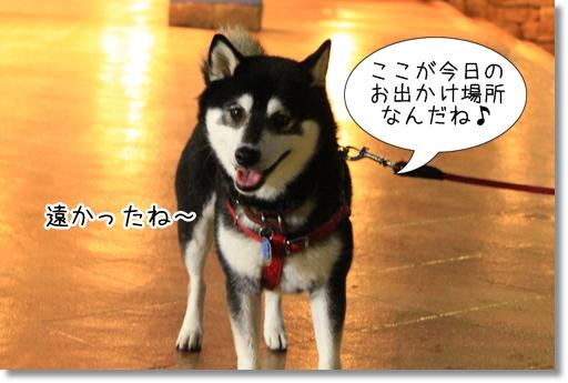 4_20120530023133.jpg