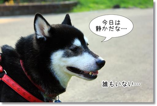 4_20120726100515.jpg