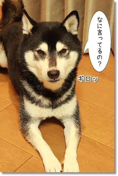4_20121128041049.jpg