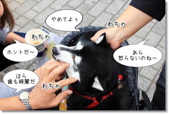 4_20121201115851.jpg