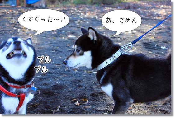 4_20121202021708.jpg