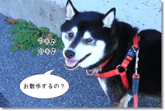 4_20121205143013.jpg