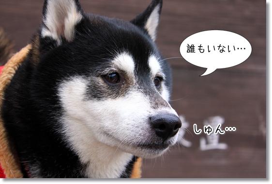 4_20130130162004.jpg