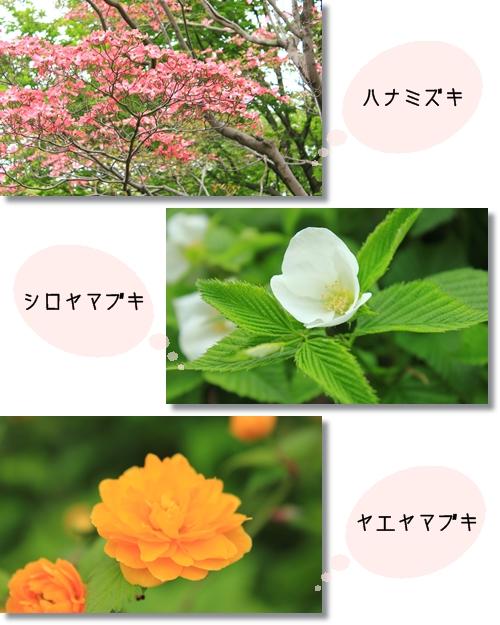5_20120524025506.jpg
