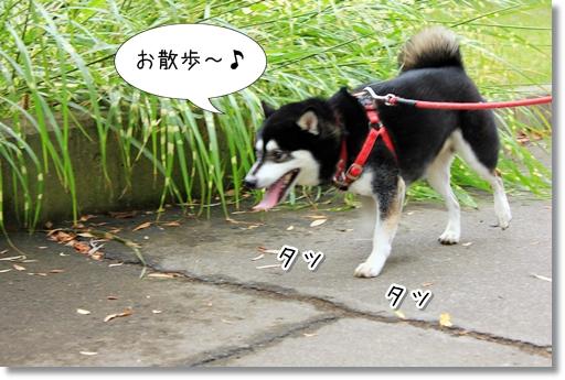 5_20121010043700.jpg