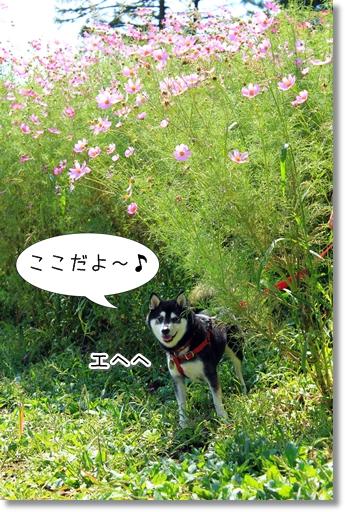5_20121014111450.jpg