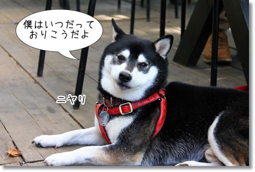 5_20121015154709.jpg