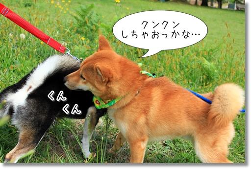 5_20121019031108.jpg