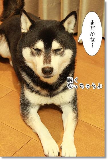 5_20121128041049.jpg