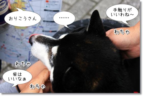 5_20121201115851.jpg